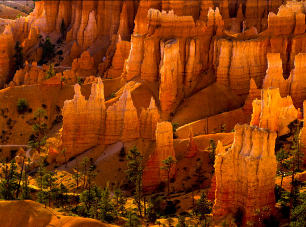 Early morning light illuminates the fantastic hoodoos of Bryce Canyon National Park, Utah.