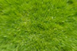 Grass with radial blur effect. © F.M. Kearney