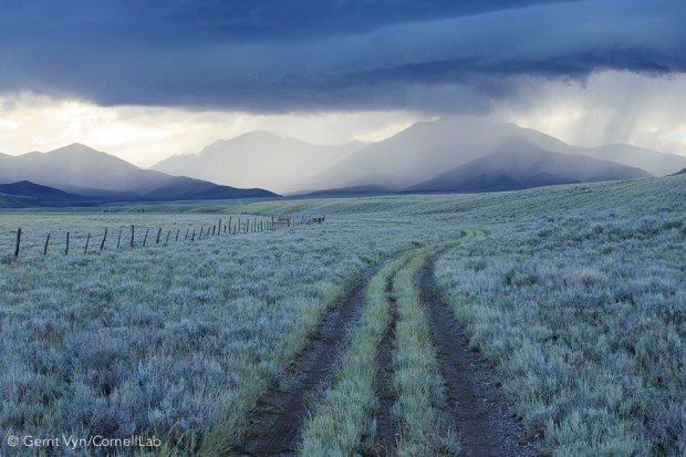 Rain showers over sagebrush-steppe at the foot of the Sawtooth Mountains. Clark County, Idaho. Photo by Gerrit Vyn.