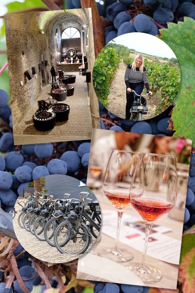 Découverte des vins d'Anjou