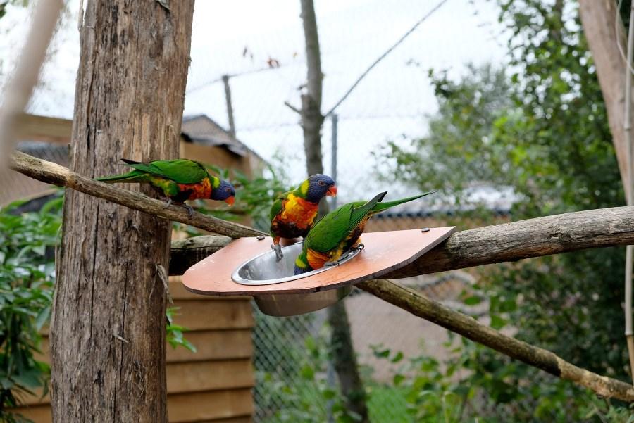Oiseaux au zoo de la Boissière du Doré