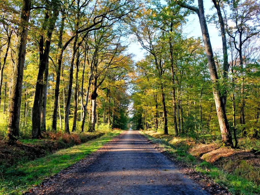 Forêt du Gâvre en Loire-Atlantique