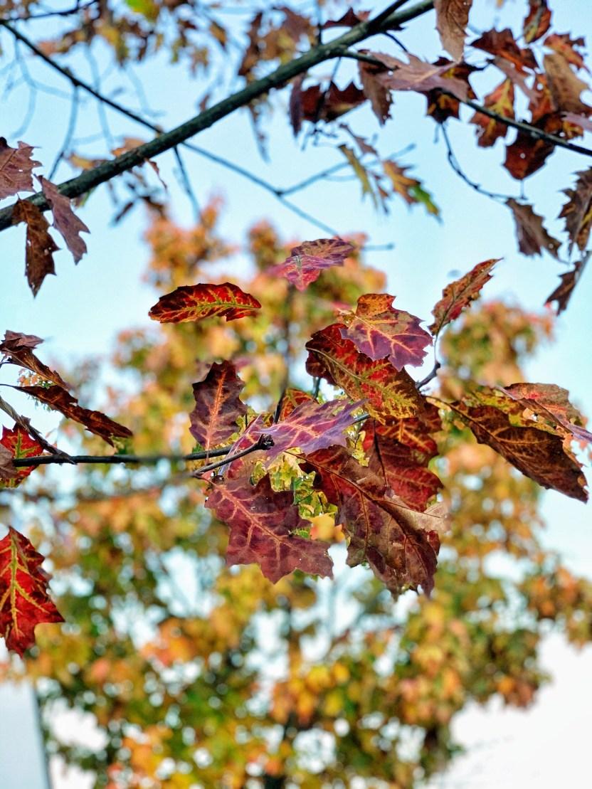 Le Jardin des plantes à Nantes en automne