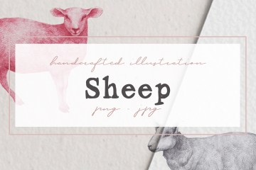 Hand drawn Sheep Illustrations