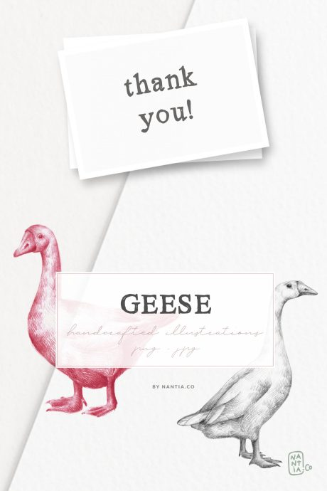 Hand drawn Geese Illustrations