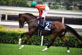 HK Mile winner Maurice