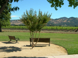 Yountville, Vintage Subdivision, park and vineyard views