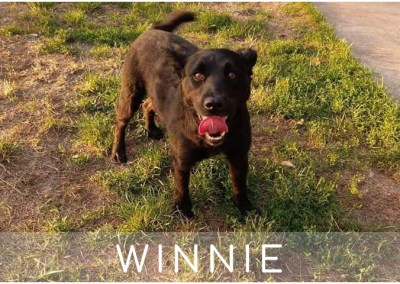 Winnie: 6 Jahre | 45cm | aus Polen