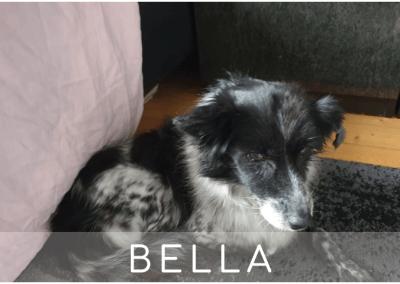 Bella: 13 Jahre I 30cm I JETZT in Deutschland