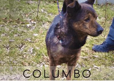 Columbo: 4 Jahre I 30cm I aus Polen