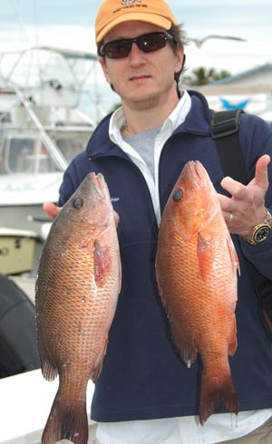 Mangrove Snapper from Naples deep sea fishing charter.