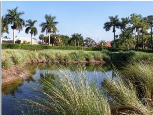 royal palm country club