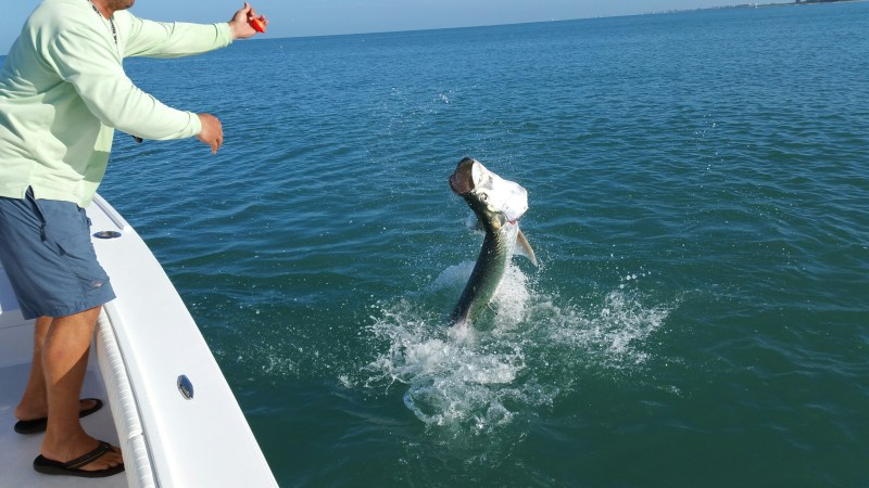 5 Fascinating Facts About Tarpon
