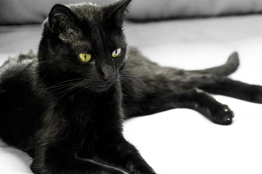 Gatto Nero, scaramanzia