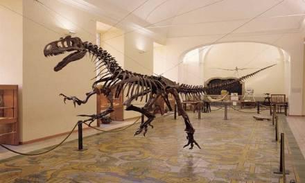 Museo di Paleontologia di Napoli