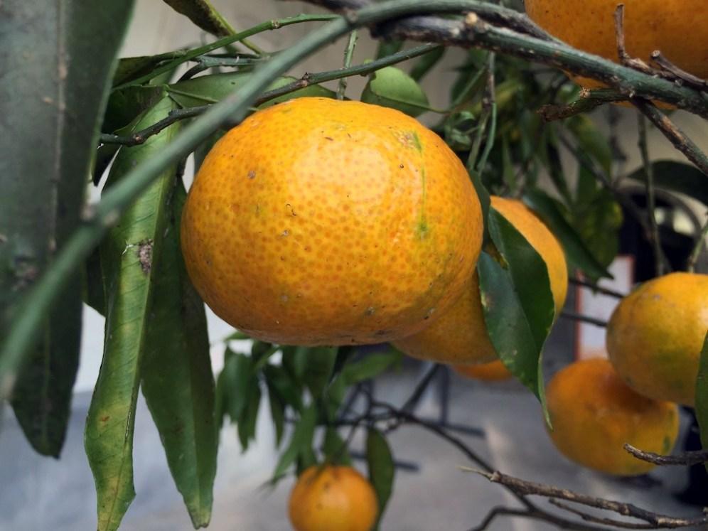 Festa del Mandarino dei Campi Flegrei