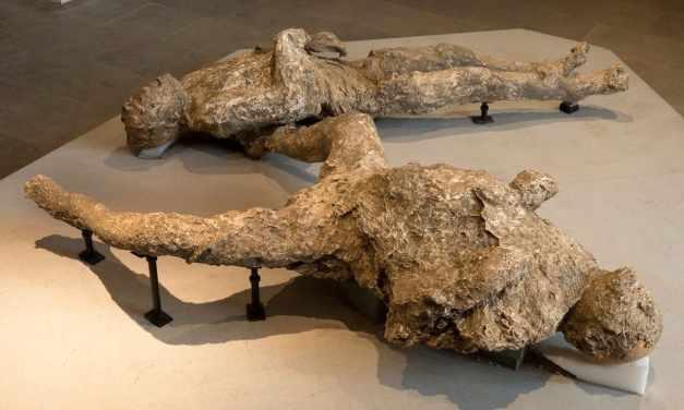 Pompei scavi, le prime foto del nuovo dell'Antiquarium