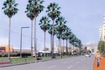 Gli alberi a via Marina