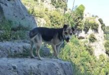 Costiera Amalfitana: biscotto il cane amalfitano