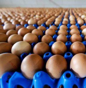 Uova conaminate anche in Campania: trovate tracce di Fipronil