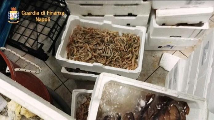 San Giovanni A Teduccio: sequestrati 200 kg di frutti di mare