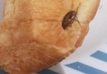 Caserta, scoperta choc: trovata blatta in una merendina
