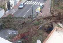 Maltempo a Napoli: albero killer uccide un 21enne