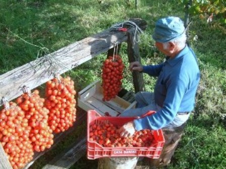 pomodorini vesuvio