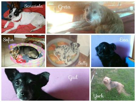 Collage cuccioli