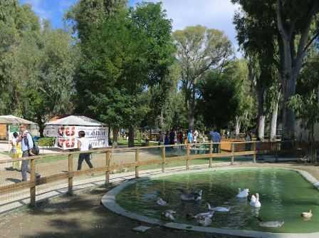 fattoria zoo
