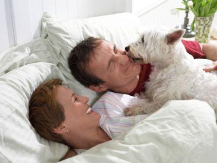cane a letto