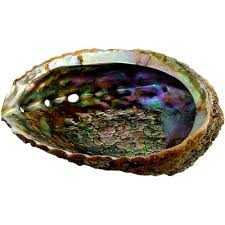 Sage Shell (lg)