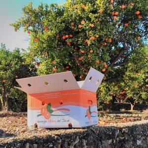 comprar-naranjas-de-valencia