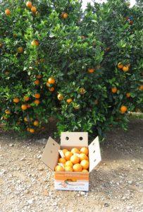 Navel-Powel-naranjas-a-domicilio