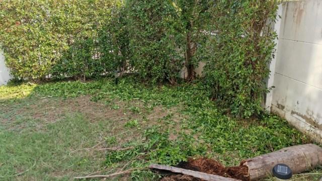 植木を剪定