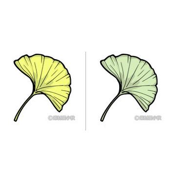 銀杏(イチョウ)のイラスト | 素材屋小秋