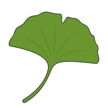 緑のイチョウの葉【無料イラスト・フリー素材】