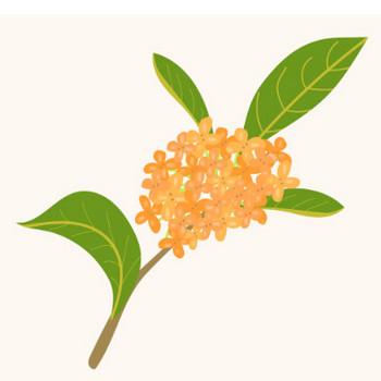 金木犀・キンモクセイ(英語:Fragrant olive)秋の花のイラスト | 商用フリー(無料)のイラスト素材なら「イラストマンション」