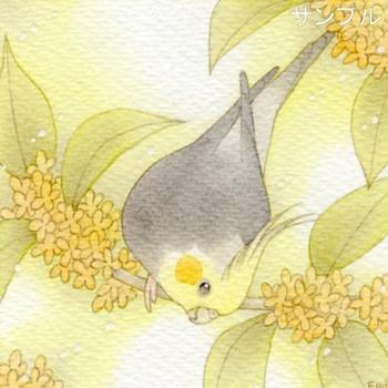 ■オカメインコのイラスト「オカメインコと金木犀」 ( イラストレーション ) - アマチュアイラストレーターのお絵描き日記 - Yahoo!ブログ