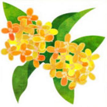 おしゃれなイラストが無料/イラストカップillustcup : 無料イラストのカテゴリー : 植物
