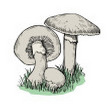 """Search results for """"Mushrooms"""" clipart - Openclipart"""