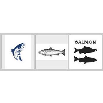 鮭 に関するベクター画像、写真素材、PSDファイル   無料ダウンロード