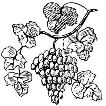 ブドウのベクトル描画 | パブリックドメインのベクトル