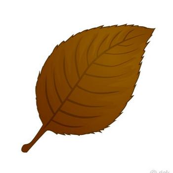 落ち葉の無料イラスト素材|iiイラストイメージ