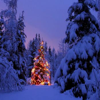 クリスマスツリー 壁紙 #04102