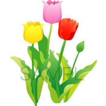 無料イラスト・フリー素材を紹介するブログ : 春の花「チューリップ」