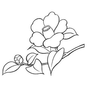 つばき(椿)のイラスト・画像No.13『ツバキ・白黒線画』/無料のフリー素材集【百花繚乱】