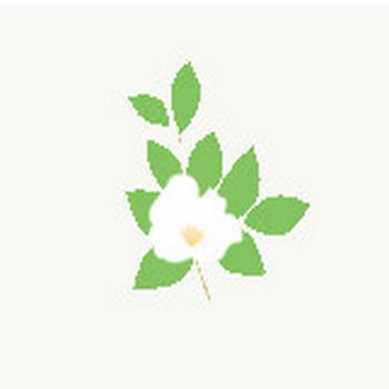 夏椿/ナツツバキ/Japanese stuartia: 素材庭園(フリーイラスト素材集) ~花・動物・食べ物・人物・雑貨他