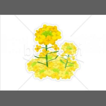 菜の花|テンプレートのダウンロードは【書式の王様】