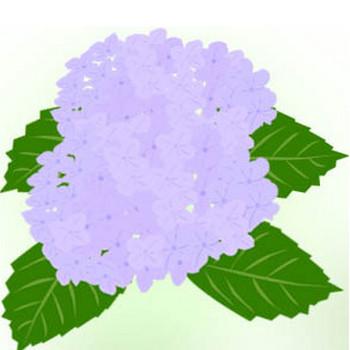 紫陽花のイラスト | イラスト素材パラダイス 商用利用無料のイラスト素材